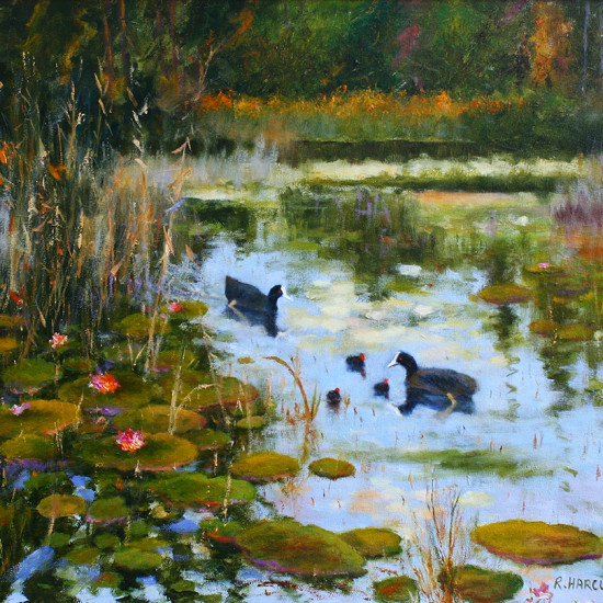 Robert Harcus - Coots and waterlillies
